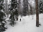 Winter fun - Plenty of paths and trails to walk or hike with your dog no matter what the season.