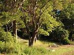 Our garden. Hammock under trees near lake shore