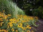 Vibrant summer sunflowers