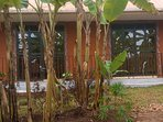 Tropical paradise front view garden