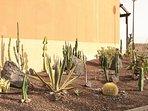 Cactus garden.
