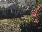 Our yard is bordered with Azaleas that are spectacular in the Spring.