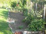 Areti Studio   Garden