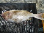Natural charcoal grill...local sea food from night catch