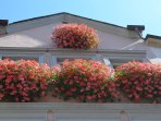 The ubiquitous beautiful flower window boxes seen on all the houses