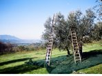 Set in 5 acres of olive grove with 360 degree views