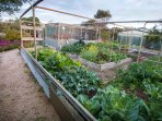 Coorong Cabins - Kitchen Garden.  Help yourself to fresh seasonal produce.