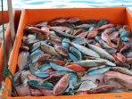 pêche multicolore