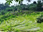 Local rice paddy trek