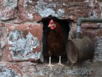 Meet some of our farm residents!