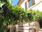 Particolare esterno pergola con uva in autunno