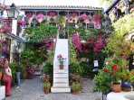 Otro hermoso patio que podrás visitar durante todo el año