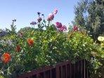 Upper deck mini garden