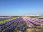 The flower fields and keukenhof just 20-30 minutes ride.