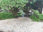 Beach access from the homes (Kekela Beachfront Estate)