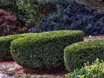 Trimmed bushes in front of the house