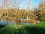 Beautiful garden & pond