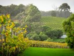 Heaps of wineries surround you! (5 - 50mins drive)  Leeuwin, Voyager & Xanadu just down the road!