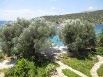 'Old Olives' garden