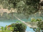 Peace and tranquility under the old olives