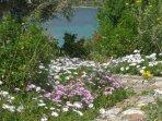 The scent of spring... garden in full bloom