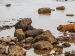 Rocks pools on Beadnell point beach