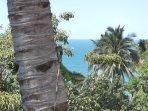 Spot the iguana?