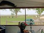 Pearces Waterfront Lodge private screened porch.
