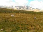Da qui non è lontano neanche il Parco Nazionale del Gran Sasso e Monti della Laga