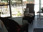Screened in back porch with wicker rockers and chaise lounge.