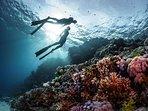 Local scuba diving tours