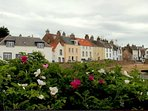 View of flat with Rosa Rugosa, the local seaside perfumed rose