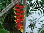Beautiful tropical flowers growing right on the property at Tropical Breeze Villa.