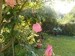 Roses in Villa's garden