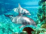 See and swim with the Dolphins at the Dolphin Research Center just 5 minutes away by car.
