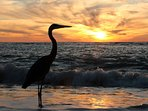 Nature, beaches and beautiful scenery abound on Sanibel.