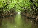 Explore Everglades National Park by kayak or boat trip