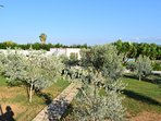 Aerial view of villa and olive grove