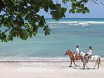 Ride Horses in Tropical Dry Forest and the Beach; Equestrian Center On-Site