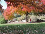 Fantastic fall colors enhance your leisurely walk or picnic.