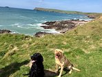 Dogs on the cliff top