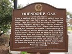 Famous 'Friendship Oak' 3 blocks from cottage