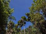 Five acres of rainforest