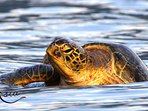 Mating turtles and other marine wildlife can be seen throughout your cruise.