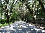 Majestic tree lined streets leading to the Fountain of Youth