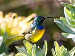 Little Paradise - sunbird