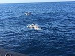 Dolphin Safaris - Portimao -10 minutes drive away