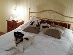 Our two mutts relaxing on our spare bed, and looking forward to meeting future friends.