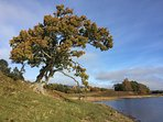 Loch Insh beach (5 mins away from our back door) with perfect spot to view Osprey Island.