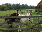 Meet Sam and Daisy, our resident donkeys!